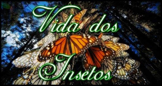 23out2012-dezenas-de-borboletas-monarcas-danaus-plexippus-se-amontoam-no-tronco-de-uma-arvore-do-santuario-chincua-serra-no-mexico-entre-outubro-e-marco-cerca-de-1-bilhao-dos-insetos-s