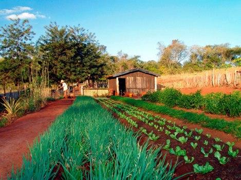 agricultura-familiar-organicos (1)