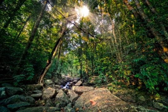 floresta-20130124194932